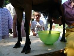 Avec Tiligolo on découvre d'où vient le lait