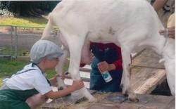 Les enfants traient la chèvre