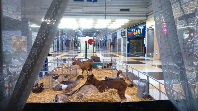 Les animaux se préparent avant l'ouverture de la galerie