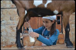 Les ateliers de la ferme de Tiligolo