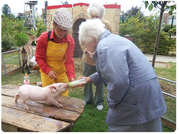 Un resident donne le biberon au cochon