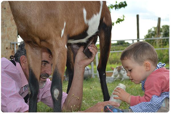 Un jeune garçon decouvre le lait de la chèvre